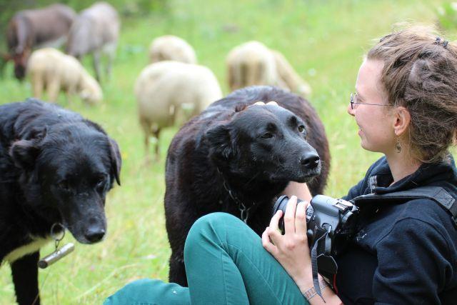 Herdenschutzhunde begrüßen uns.
