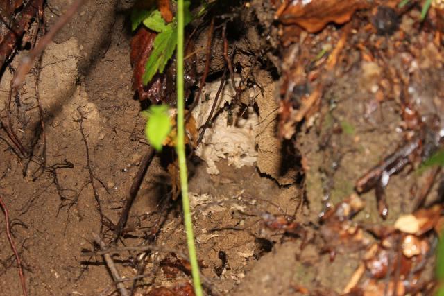 Wespennest, vom Bären ausgegraben