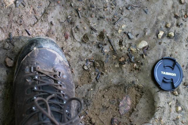 Schuh und Bärentatze