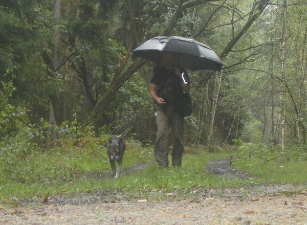 Mit Regenschirm durch Kieferwald