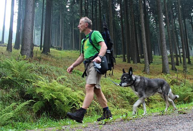 Fichtenwald ohne Ende