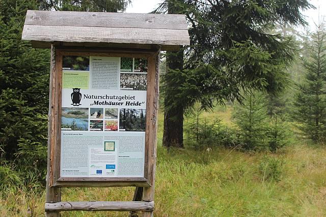 kleines Naturschutzgebiet im Fichtenwald