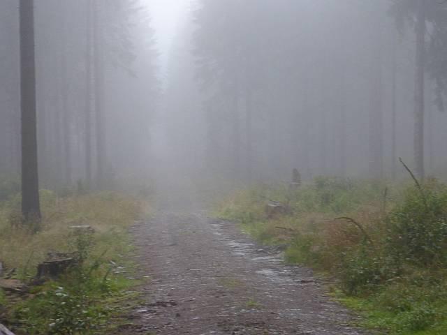 Nebel im Fichtenwald