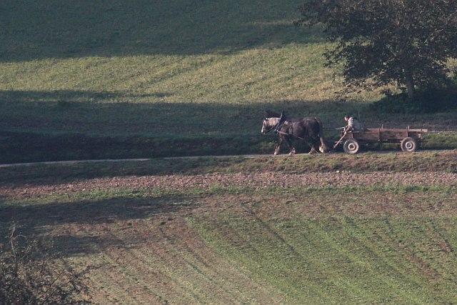 Pferdewagen vor der A8