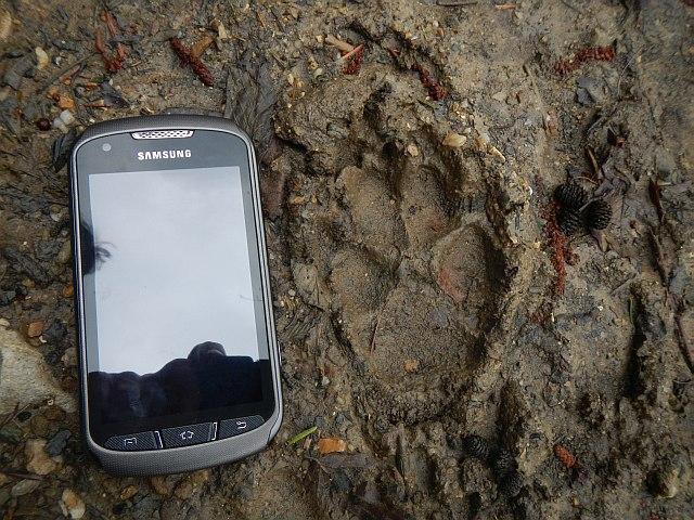 Wolfspur