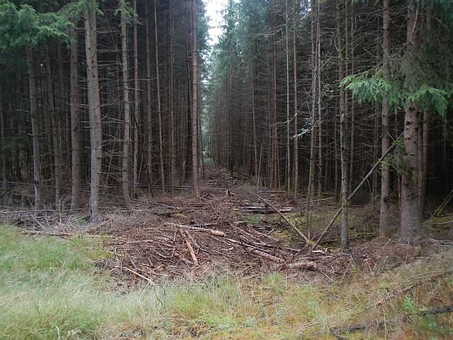 Forstwald zum abgewöhnen