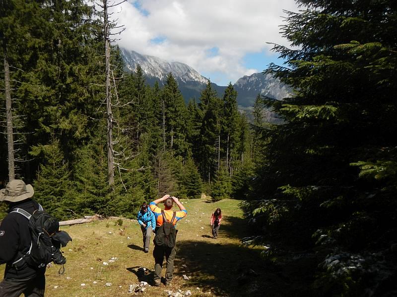 Aufstieg zu den Almwiesen. Piatra Craiului Nationalpark.