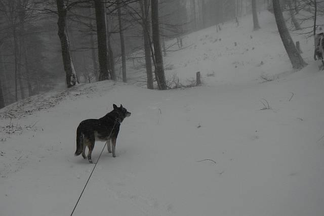 Forstweg zugeschneit