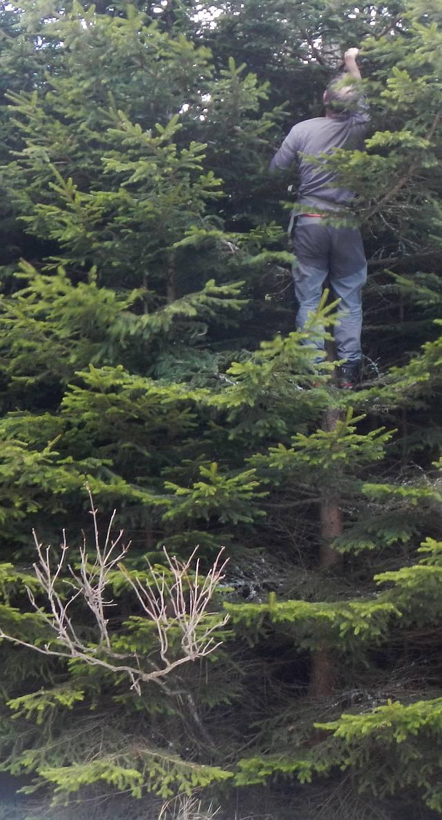 Im Baum um die Fotofalle aufzuhängen