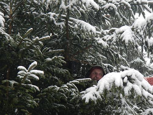Wildtierkamera im Baum