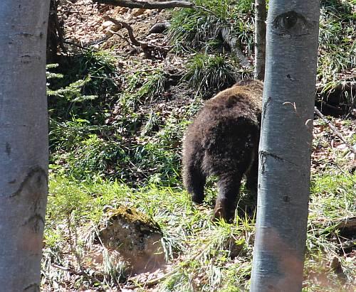 Bärenbegegnung